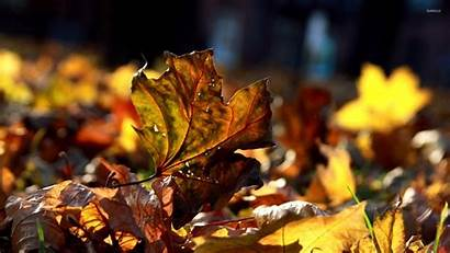 Dry Autumn Leaves Wallpapers Leaf Nature Fall