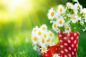 Free Screensavers Flowers Beautiful