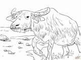 Coloring Buffalo Printable Supercoloring Drawing Drawings Buffaloes Skip Paper Categories sketch template