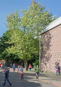 Fällen Von Bäumen : umweltausschuss genehmigt f llen von 15 gemeindeigenen b umen emscherblog nachrichten f r ~ Eleganceandgraceweddings.com Haus und Dekorationen
