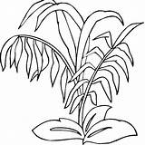 Coloring Plants Rainforest Pages Plant Jungle Drawing Sea Bamboo Trees Printable Forest Grass Ocean Underwater Getcolorings Getdrawings Zombie Clipartmag Drawings sketch template