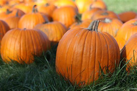 Corona Pumpkin Patch the pumpkins arrive coronado community united methodist