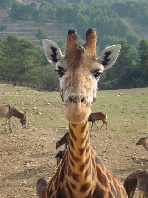 Eddie & Brigitte Bramley: Aitana Safari Park