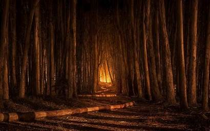 Spooky Forest Landscape Path Trees Nature Tree