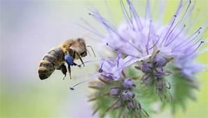 Welche Blumen Für Bienen : gestalte deinen garten bienenfreundlich so geht s bunte blumenvielfalt ~ Eleganceandgraceweddings.com Haus und Dekorationen