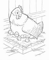 Coloring Pages Farm Animal Hen Chicken Sitting Nest Mother Printable Colouring Adult Adults Honkingdonkey Colorful Sheets Activity Sheet sketch template