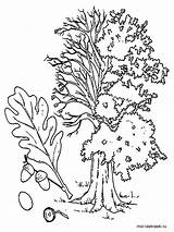 Tree Oak Coloring Trees Printable Recommended Getdrawings Getcolorings Mycoloring sketch template
