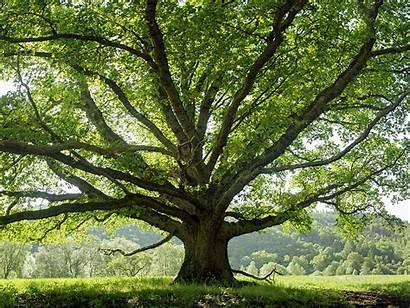 Trees Names Britannica Holding Sky