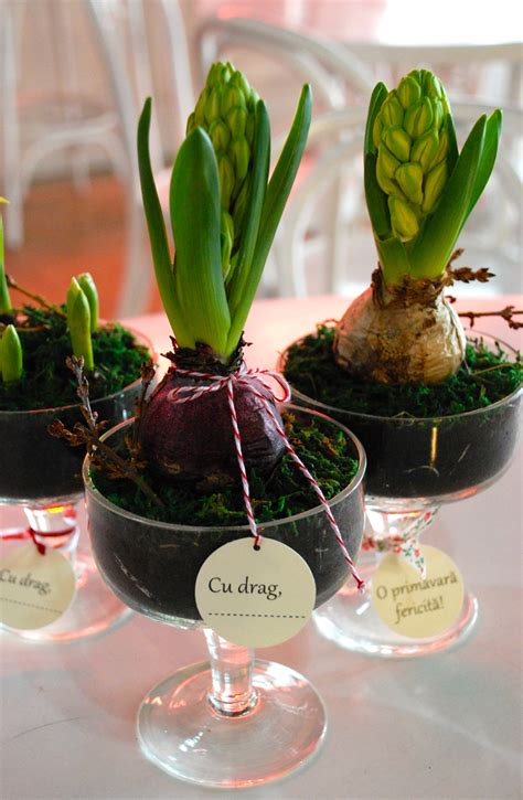 plant favors spring bulbs pot wrapping wedding favors