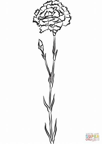 Carnation Coloring Pages Printable Categories