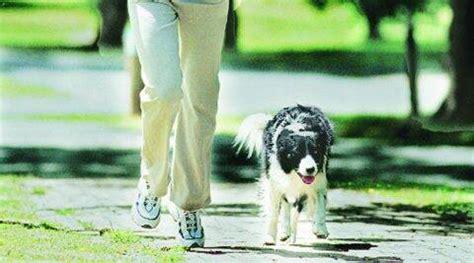 Chandigarh: Ambulance service for small, pet animals ...