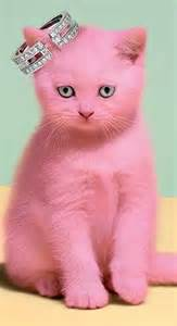 pink cats 25 best ideas about pink cat on cat paws