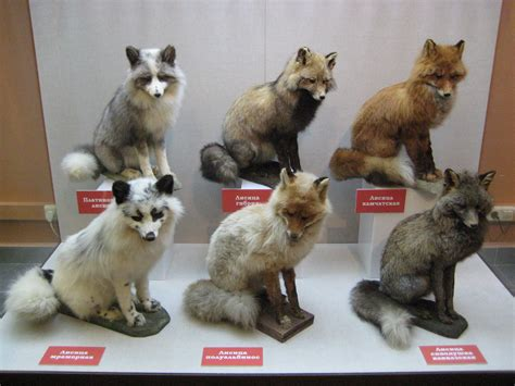 fox colors fox color variations history