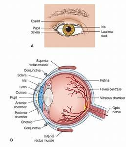 Eyes Ears And Venn Diagram : eye and ear anatomy and physiology review ~ A.2002-acura-tl-radio.info Haus und Dekorationen