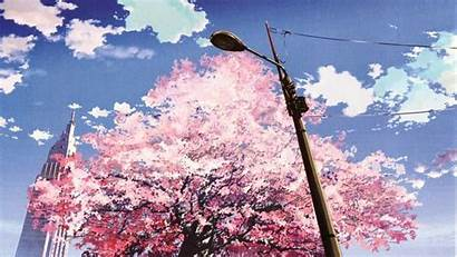 Blossom Cherry Anime Tree Wallpapers Pc Sakura