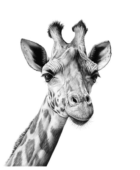 richard symonds wildlfe artist wildlife gallery richard