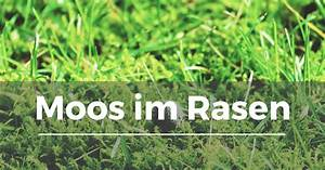 Spritzmittel Gegen Unkraut Im Rasen : moos im rasen garten schule ~ Michelbontemps.com Haus und Dekorationen