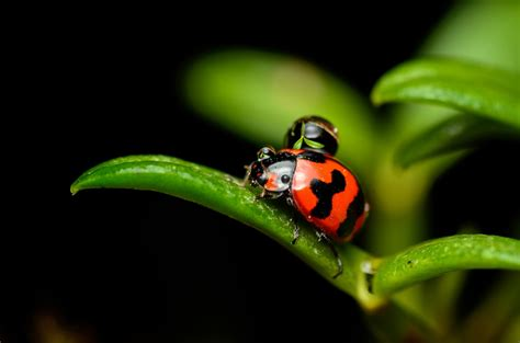 Top 10 Macro Photography Tips  Adorama Learning Center