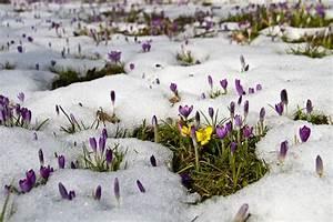 Blumen Im Winter : jetzt aber fr hling blumen los rostock heute ~ Eleganceandgraceweddings.com Haus und Dekorationen
