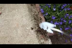Moos Vernichten Mit Essig : video moos entfernen mit einem hausmittel ~ Lizthompson.info Haus und Dekorationen