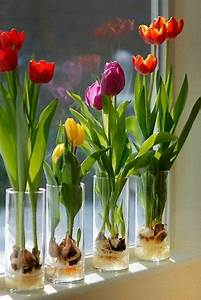 Blumen Für Fensterbank : die besten 17 ideen zu tulpen pflanzen auf pinterest tulpen wei e tulpen und deko blumen ~ Markanthonyermac.com Haus und Dekorationen