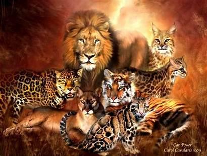 Wild Cats Animals Cat Desktop Wallpapers Border