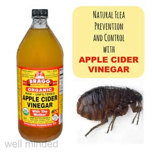 apple cider vinegar fleas cats flea prevention and with apple cider