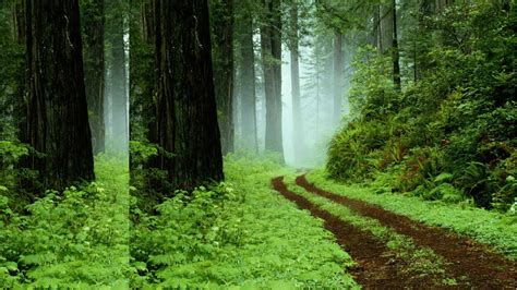 Green Forest Image by Green Forest Backgrounds Wallpaper Cave