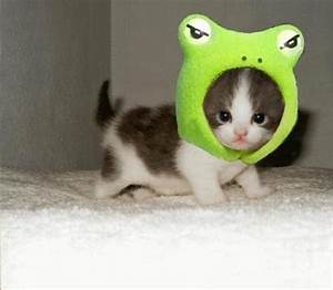 Pictures blog: Cute Animals