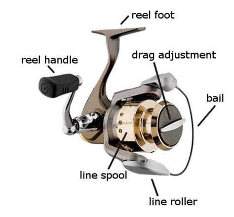 fishing reel types  fishing reels fishingnoobcom