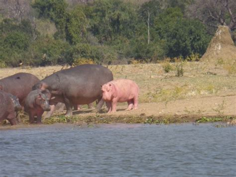 Zambezi Guided Tours