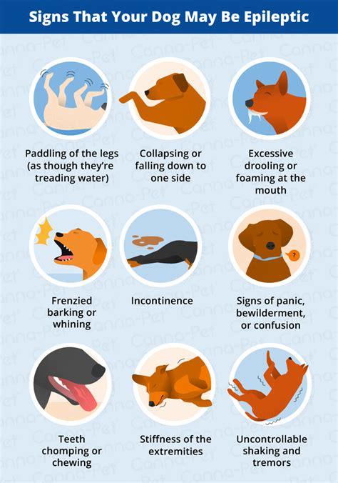 Dog Seizure Symptoms and Signs