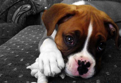 dogs   parent child bonding mechanism