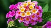 sun loving shrubs Sun-loving flowers | The Guardian Nigeria News - Nigeria ...