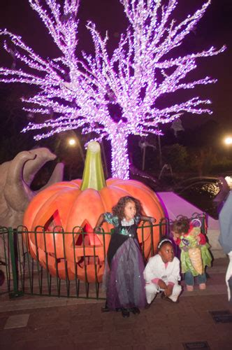 how much does zoo lights cost in phoenix public events for sponsorships saint louis zoo