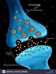 Labeled Illustration Depicting Normal Neuron Synapse Activity Stock Photo