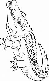 Crocodile Coloring Pages Animals Crocodiles Animal Alligators Drawing Printable Outline Sheets Getdrawings Town Powered Results Coloringtop sketch template