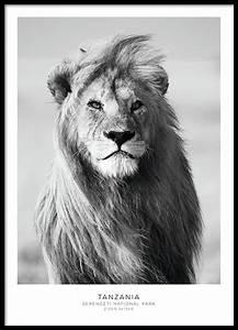 Tierbilder Schwarz Weiß : posters med djur och insekter tavlor p s ta djur ~ Markanthonyermac.com Haus und Dekorationen
