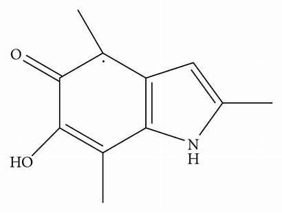 Melanin Semiquinone Radical Responsible Trapped Paramagnetic Properties