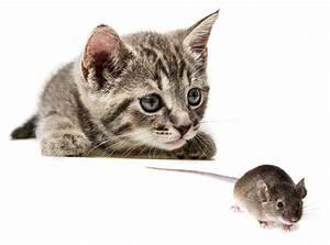 Maus In Wohnung : kann man katzen lebende m use f ttern expertenrat ~ Markanthonyermac.com Haus und Dekorationen