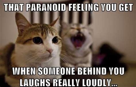 funny cat memes cattime