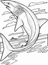Shark Coloring Pages Animals Sharks Jumping sketch template