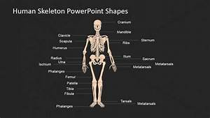 Powerpoint Slide For The Human Skeleton