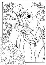 Boxer Coloring Dog Sheets Kleurplaat Colouring Dogs German Adult Pointer Shorthaired Printable Colour Edupics Puppy Horse Boxers Drawing Patterns Animal sketch template