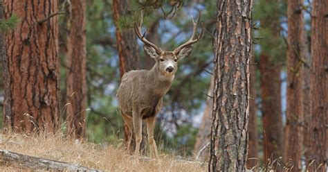 shed utah tips 100 shed utah tips tips on for deer