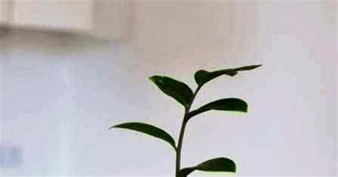 membuat kerajinan tangan sederhana mewarnai vas bunga