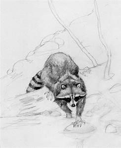 A Pair of Raccoon Pencils | The Art of Monte Ellis