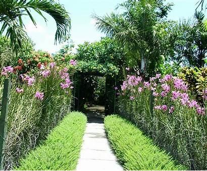 Tropical Plants Backyard Gardens Plant Designs Garden