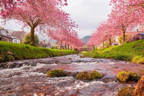 30 Hd Cherry Blossom Wallpapers For Desktop Designemerald