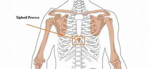 The 25  Best Xiphoid Process Ideas On Pinterest